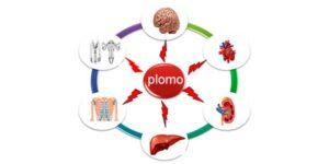 Efectos del Plomo en la Salud